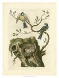 Nozeman Birds & Nests III Giclee Print by  Nozeman