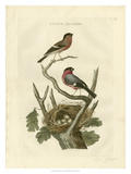 Nozeman Birds & Nests I Giclee Print by  Nozeman