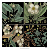 Graphic Botanical Grid V Giclee Print by Mark Catesby