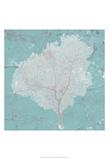 Graphic Sea Fan VII Poster by  Studio W