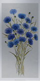 Cornflower Patch I Posters by Tim O'toole