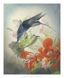 Hummingbird Cycle II Poster by Steve Hunziker