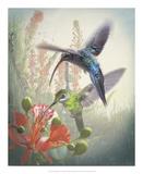 Hummingbird Cycle I Prints by Steve Hunziker