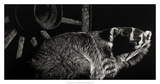 Scratchboard Tenacious Giclee Print by Julie Chapman