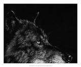Scratchboard Wolf I Giclee Print by Julie Chapman