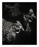 Scratchboard Skeptics Giclee Print by Julie Chapman