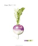 Root Vegetable VI Giclee Print by Grace Popp