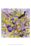 Oriole & Plums Posters by Marcia Matcham