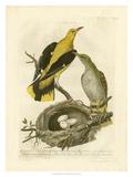Nozeman Birds & Nests II Giclee Print by  Nozeman