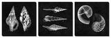 Elegant Negative - Shells Art by N. Harbick