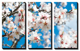 Almond Blossom Posters by  ArtesiaWells