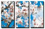 Almond Blossom Prints by  ArtesiaWells