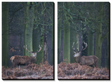 Two Large Deer Stags Stand their Ground in Forest in Winter Print by Alex Saberi