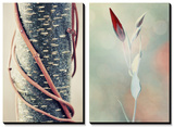 Linked and Bound, Alone and Free Prints by Philippe Sainte-Laudy