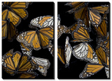 A Monarch Butterfly (Danaus Plexippus) Prints by Joel Sartore