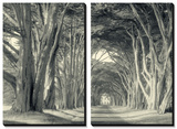 Cypress Tree Road, Point Reyes Prints by Vincent James