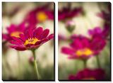 Red Flower Petal Print by Marco Carmassi