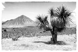 ¡Viva Mexico! B&W Collection - Mexican Desert Photographic Print by Philippe Hugonnard
