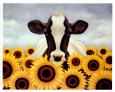 Surrounded by Sunflowers Art Print by Lowell Herrero