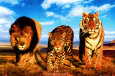 Wild Animals (Color Photography) Posters