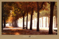 Champs-Elysees Art Print by Bo Brannhage