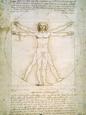 Vitruvian (da Vinci) Posters