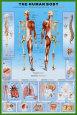 İnsan Vücudu Poster
