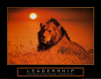 Leadership: Lion Kunsttryk