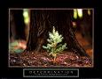 Odhodlání, Determination: borovička (citát vangličtině) Umělecká reprodukce