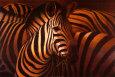 Cebra grande Lámina por T. C. Chiu