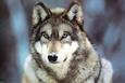Fotografías en color de animales salvajes Posters