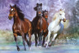 Horses (Color Photography) Posters