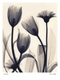 Tulip and Daisy Art Print by Judith Mcmillan