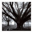 Oak Grove, Winter Art Print by William Guion