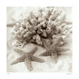 Starfish (B&W Photography) Posters
