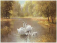 Swans (Decorative Art) Posters
