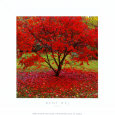 Acer Art Print by Bent Rej