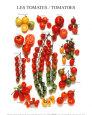 Tomates Lámina
