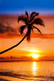 Sunset Palm Juliste