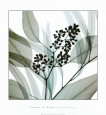Eucalyptus Art Print by Steven N. Meyers
