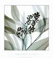 Eukalyptus Kunsttryk af Steven N. Meyers