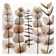 Eucalypti II Umělecká reprodukce od Steven N. Meyers
