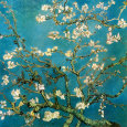 Blommande grenar av mandel, San Remy ca 1890 (Almond Branches in Bloom, San Remy, c.1890) Konsttryck av Vincent van Gogh