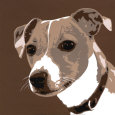 Jack Russell Art Print by Emily Burrowes