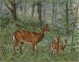 Deer Family I Lámina por Ron Jenkins