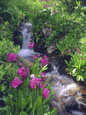 Wildflowers Along Flowing Stream in an Alpine Meadow, Rocky Mountains, Colorado, USA Fotografická reprodukce od Christopher Talbot Frank