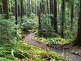 Trail to Soleduc Falls, Olympic National Park, Washington, USA Lámina fotográfica por Charles Sleicher