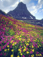 Wildflowers in Summer, Glacier National Park, Montana, USA Photographie par Christopher Talbot Frank