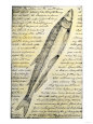 William Clark's Sketch of a Trout in the Lewis and Clark Expedition Diary Giclee Print
