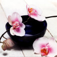Orchid in a Bowl Stampa artistica di Stephane De Bourgies